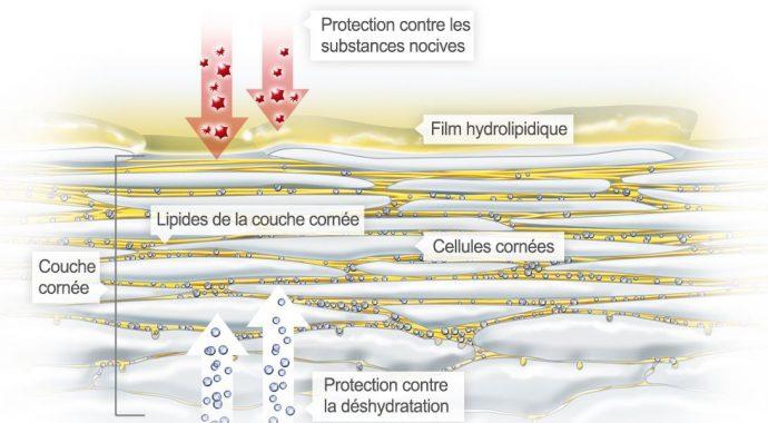 Film hydrolipidique : Barrière cutanée - kézako ? 3